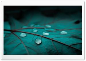 Drops On Emerald Leaf