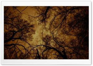 Dark Charmed Forest