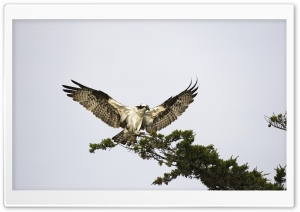 Bird Predator