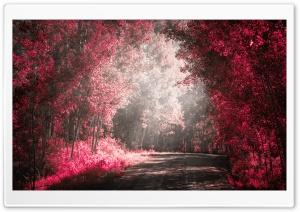 Road Nature Love