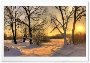 Footsteps In Snow