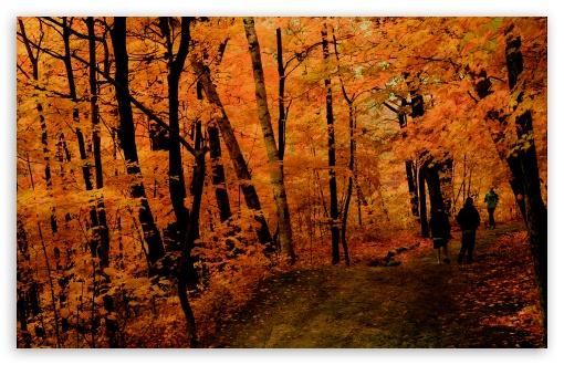 Download Fall Jogging UltraHD Wallpaper