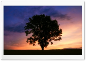 Tree Silhouette Photography