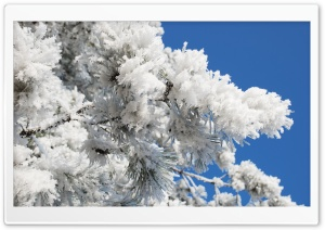 Snowy Tree Branch Blue Sky