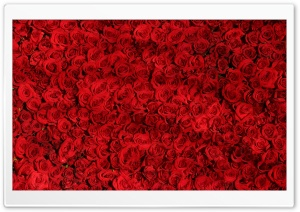 Love Red Roses Background