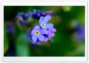 Beautiful Purple Flower, Macro