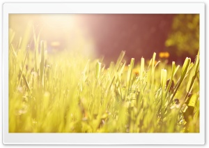 Grass Under Morning Light