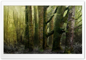 Old Forest Covered In Moss