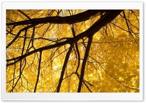 Nice Yellow Leafage