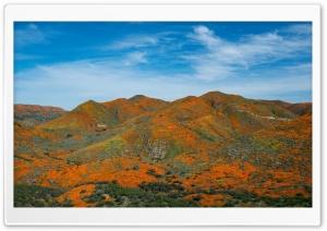 Antelope Valley California...