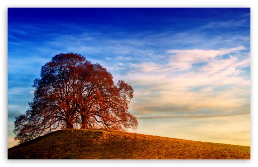 Download Two Trees, Hill, Landscape UltraHD Wallpaper