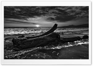 Driftwood Beach Monochrome