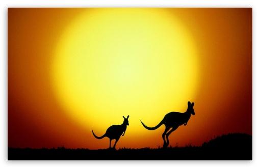 Download Kangaroo UltraHD Wallpaper