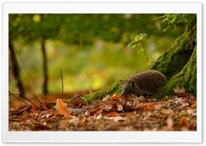 Hedgehog Under Tree
