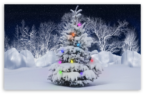 Download Christmas Tree, Outdoor UltraHD Wallpaper
