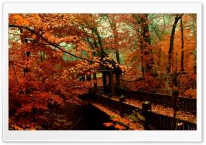A Bridge to Autumn