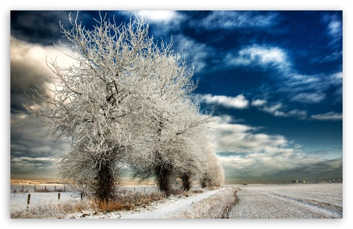 Download White Frozen Trees UltraHD Wallpaper