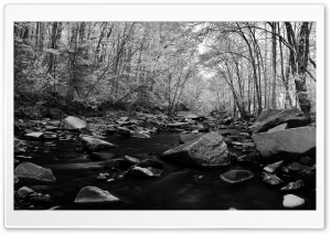Pohick Creek Black And White