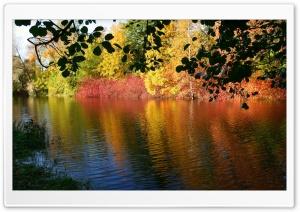 Fall Reflexion