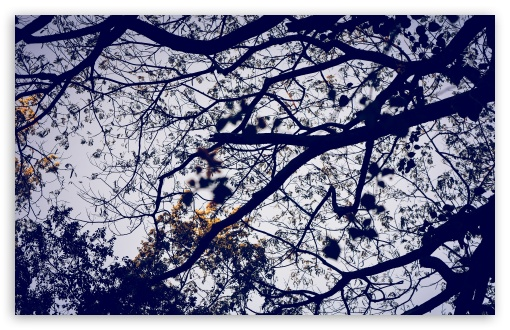 Download Network of Leaves UltraHD Wallpaper