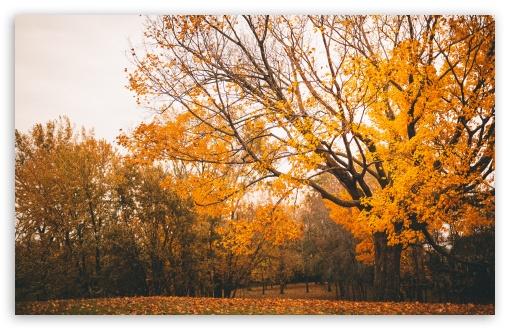 Download Autumn Scenery UltraHD Wallpaper