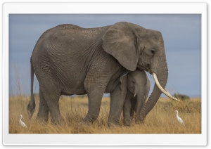Mother Elephant and Baby, Love