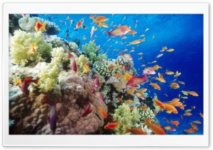 Coral Reef Southern Red Sea...