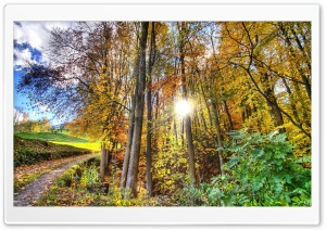 Sunlighted Forest HDR