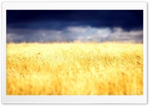 Beautiful Crop Field
