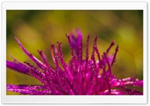 Purple Flower Petals Covered...