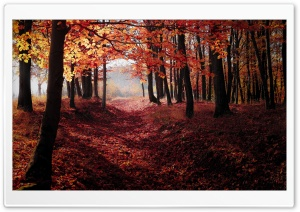 Autumn, Forest Trees, Red Leaves