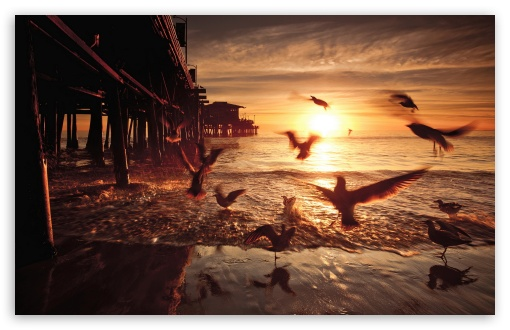 Download Sea and Fly Birds UltraHD Wallpaper