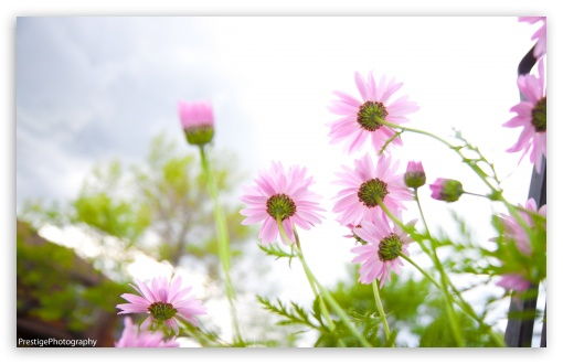 Download Summer Flowers bloomin' UltraHD Wallpaper