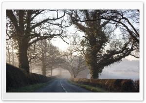 Morning, Road, Fall