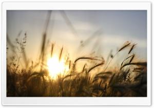 Dry Vegetation, Summer