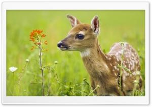 Scared Baby Deer