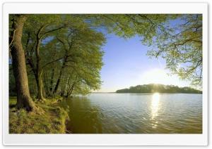 Trees Shore Lake - Sunlight