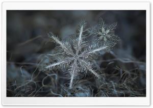 Snowflakes Macro