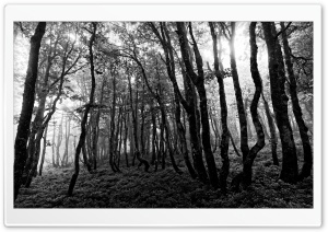 Forest Black and White...