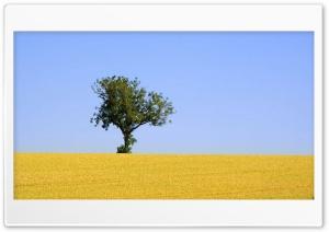 Alone Tree HD