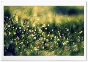 Grass Dew, Close Up
