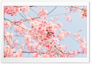 Beautiful Spring Season