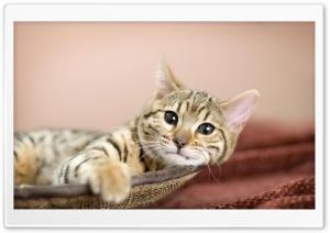 Sparta Cat