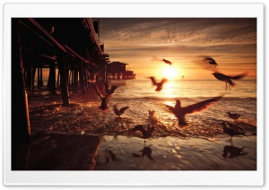 Sea and Fly Birds