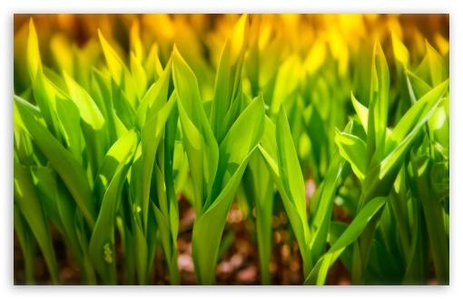 Download Plant Green Leaves UltraHD Wallpaper