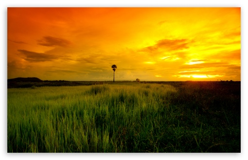 Download Beautiful Yellow Sunset UltraHD Wallpaper