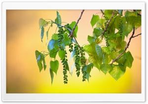 Wild Tree Fruits