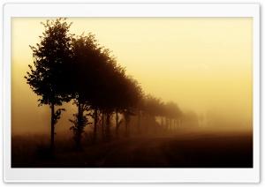 Beautiful Foggy Day