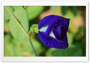 A Blue Flower Close-up