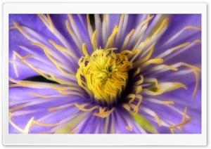 Clematis Close Up Flower